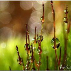 Sharon Johnstone: драгоценные капли воды