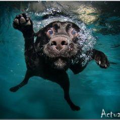 Seth Casteel: один на дне бассейна, не считая мяча и собаки