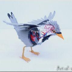 Diana Beltran Herrera: для всех желающих заглянуть птичкам под перышки