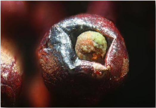 Не счесть песчинок — макрофотографии Гэри Гринберга