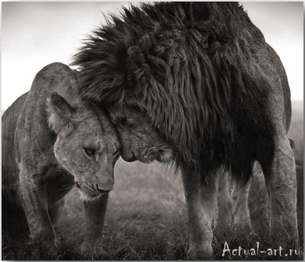 Ник Брандт (Nick Brandt)_photography_01