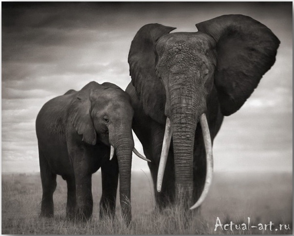 Ник Брандт (Nick Brandt)_photography_02