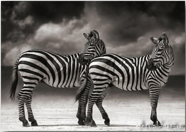 Ник Брандт (Nick Brandt)_photography_04