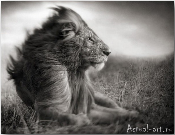 Ник Брандт (Nick Brandt)_photography_05