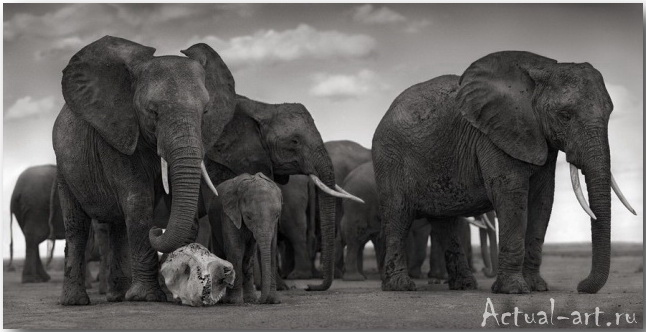 Ник Брандт (Nick Brandt)_photography_07