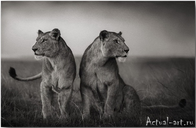 Ник Брандт (Nick Brandt)_photography_08