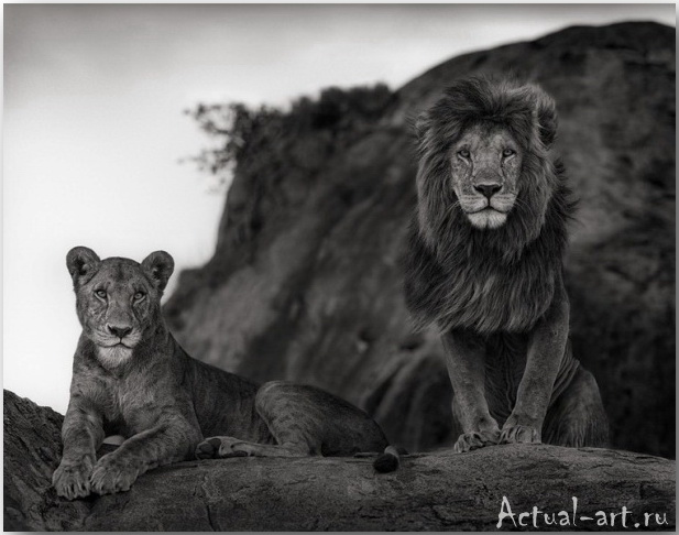 Ник Брандт (Nick Brandt)_photography_10