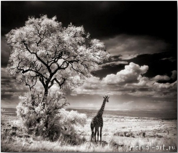 Ник Брандт (Nick Brandt)_photography_11