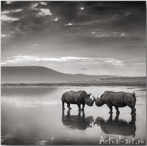Ник Брандт (Nick Brandt)_photography_13