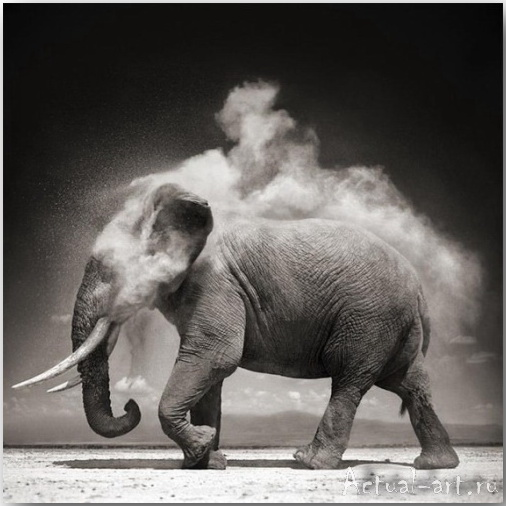 Ник Брандт (Nick Brandt)_photography_14