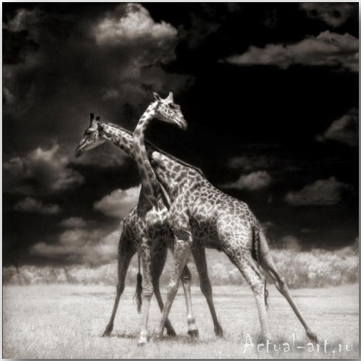 Ник Брандт (Nick Brandt)_photography_17