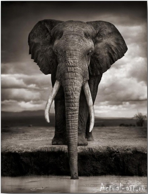 Ник Брандт (Nick Brandt)_photography_20