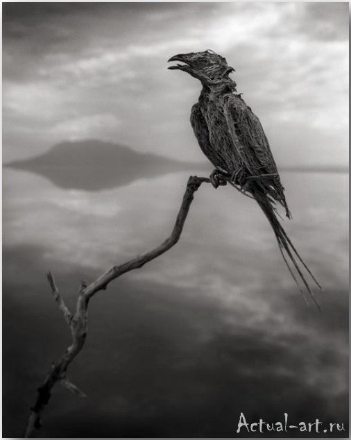 Ник Брандт (Nick Brandt)_photography_21