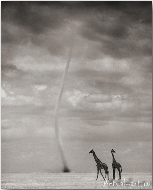 Ник Брандт (Nick Brandt)_photography_22