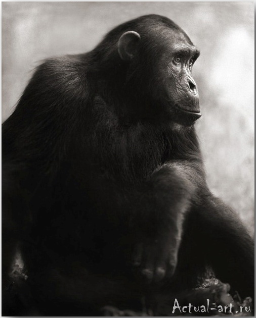 Ник Брандт (Nick Brandt)_photography_23