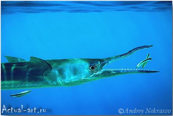 Андрей Некрасов: подводный мир в погруженном объективе