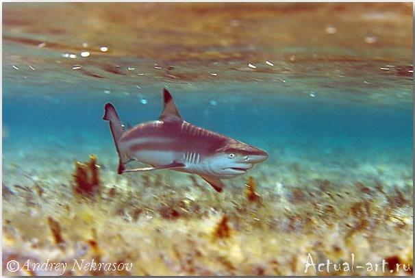 Андрей Некрасов_подводные фотографии_02