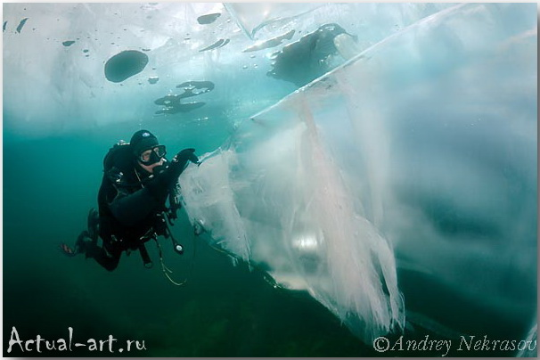 Андрей Некрасов_подводные фотографии_06