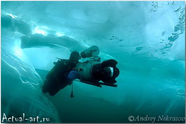 Андрей Некрасов_подводные фотографии_07