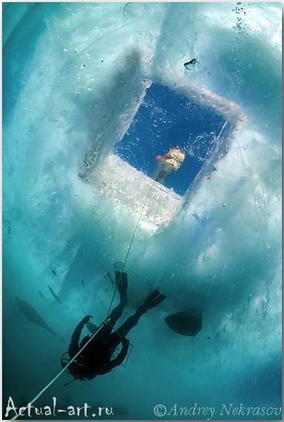 Андрей Некрасов_подводные фотографии_10