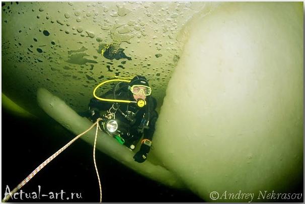 Андрей Некрасов_подводные фотографии_14