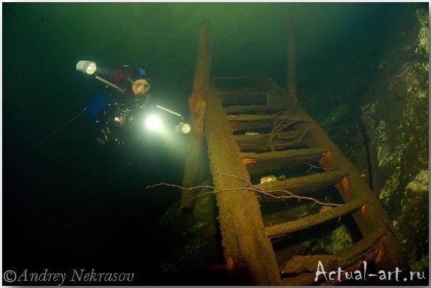 Андрей Некрасов_подводные фотографии_15