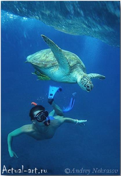 Андрей Некрасов_подводные фотографии_19