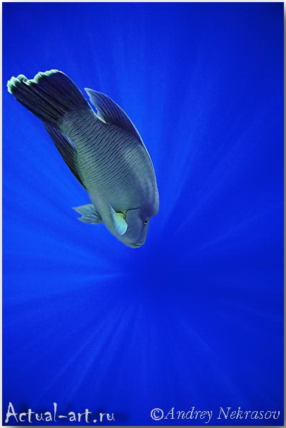 Андрей Некрасов_подводные фотографии_20