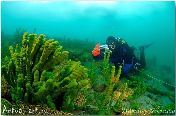 Андрей Некрасов_подводные фотографии_21