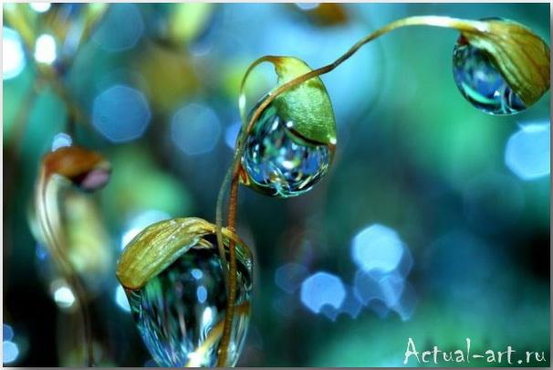 Шэрон Джонстон (Sharon Johnstone)_Photography_10