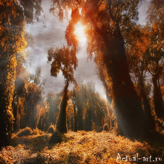 Ильдико Нир (Ildiko Neer)_Photography_09