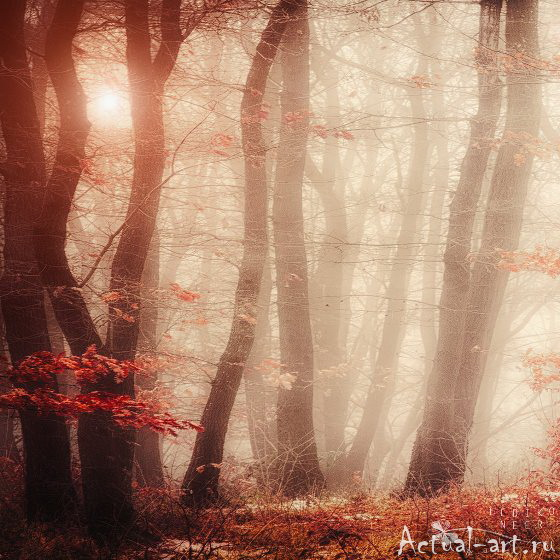 Ильдико Нир (Ildiko Neer)_Photography_10
