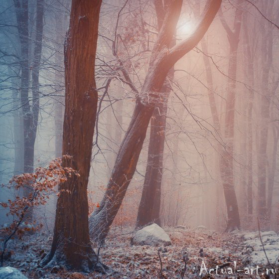 Ильдико Нир (Ildiko Neer)_Photography_14